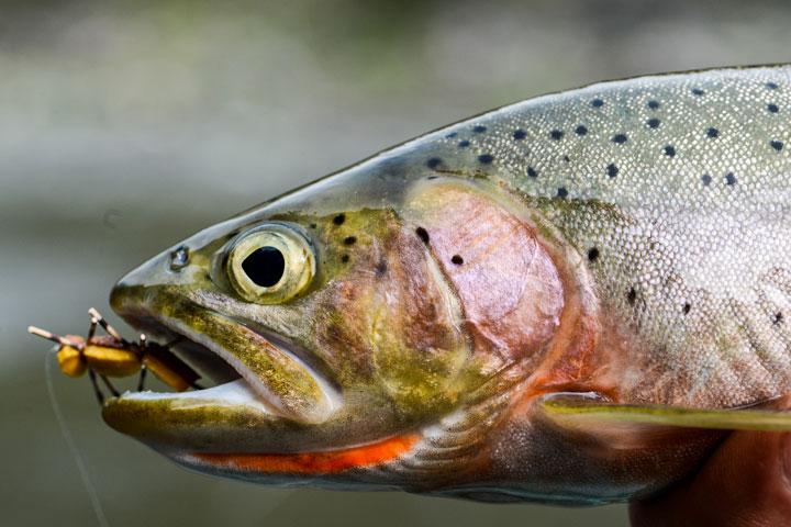 Ловля речного лосося
