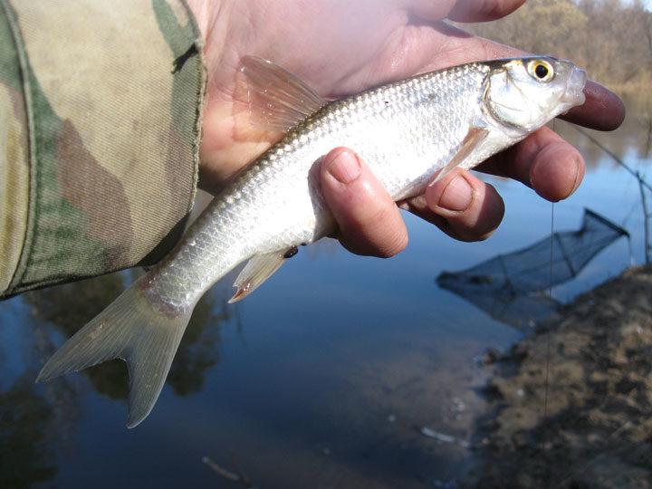 Клев ранней весной. Какая рыба ловится весной?