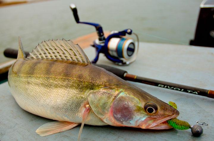 Как поймать судака ранней весной