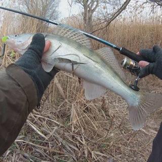 Как поймать судака весной?