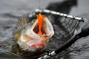 Нюансы ловли позднеосенних хищников на карьерах, небольших озерах и торфянниках