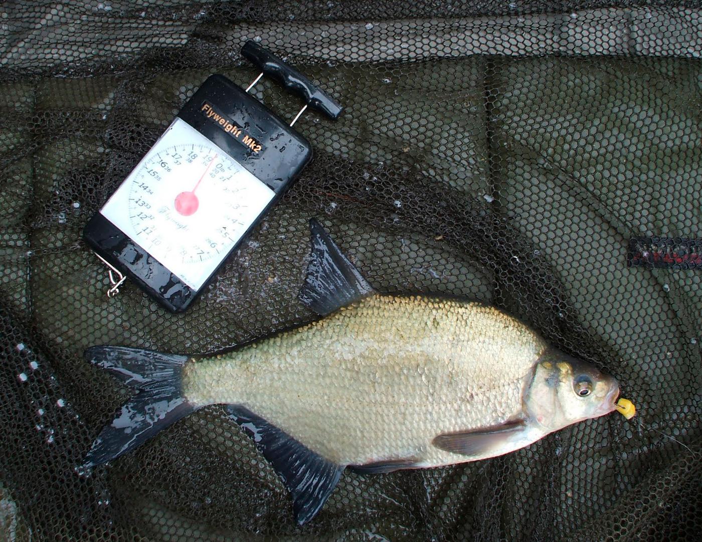Как ловить леща в мае на фидер и подготовиться к рыбалке