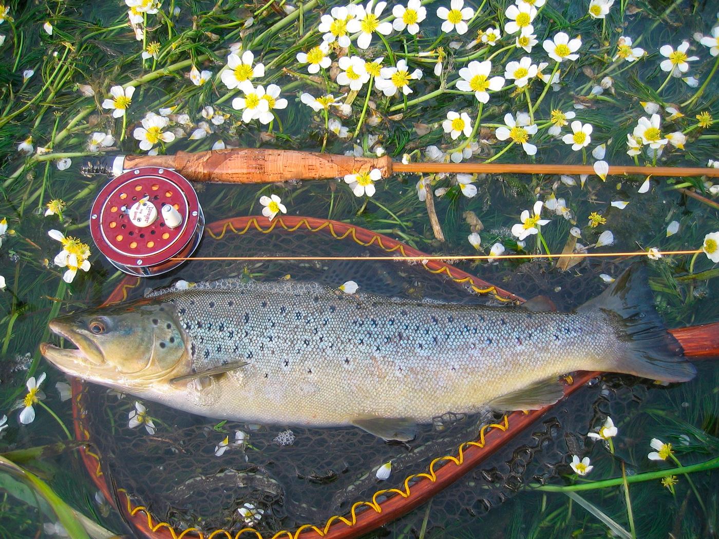 Рыбалка на хариуса на малых реках, снасти для ловли хариуса летом и осенью