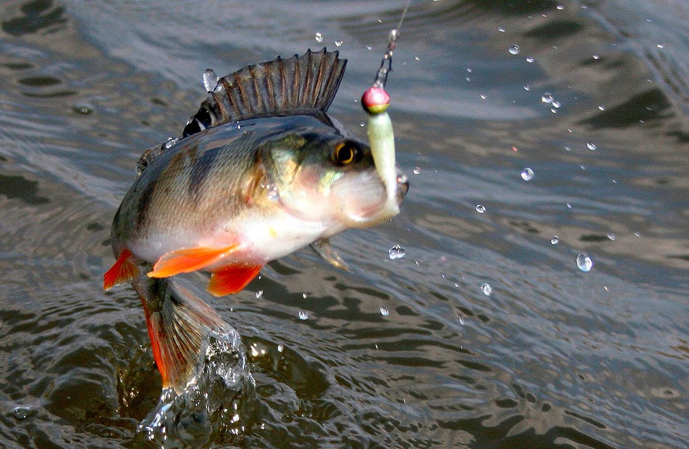 Как повысить результативность рыбалки. Несколько хитростей