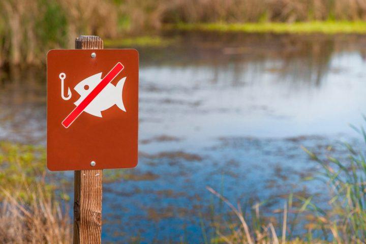 Закон РФ о нормативах бесплатного вылова рыбы для частных лиц